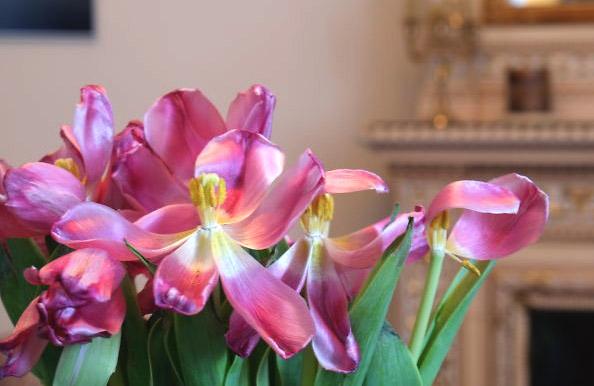 Vissna blommor tacksamt objekt