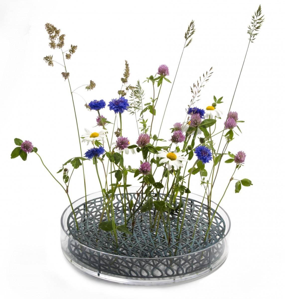 ÄNG.mega_.blommor
